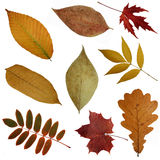 Some autumn leaves. Green and yellow red autumn, leaves pile isolated  on a white background Stock Image