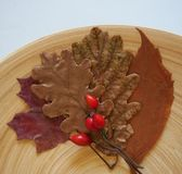 Some autumn leaves. And berries on a plate stock photos