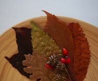 Some autumn leaves. And berries on a plate stock photo