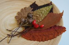 Some autumn leaves. And berries on a plate stock photography