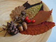 Some autumn leaves. And berries on a plate stock image