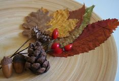 Some autumn leaves. And berries on a plate royalty free stock images