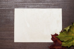 Some autumn leaves and blanck old photo background. Some autumn leaves and blanck old photo on wooden table Royalty Free Stock Photo