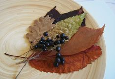 Some autumn leaves. And fox-grapes on a plate royalty free stock images