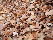 Some autumn leaves. On the ground stock photography