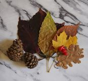 Some autumn leaves. On marble background stock image