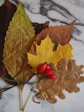 Some autumn leaves. On a plate stock image