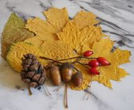 Some autumn leaves. On a plate royalty free stock photos