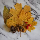 Some autumn leaves. On a plate royalty free stock image