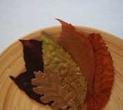 Some autumn leaves. On a plate royalty free stock photography