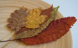 Some autumn leaves. On a plate stock photos