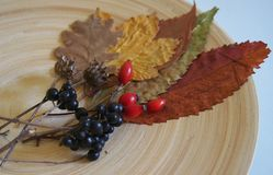 Some autumn leaves. On a plate stock images