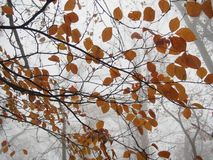 Some autumn leaves. On a tree stock photo
