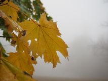 Some autumn leaves. On a tree royalty free stock photo