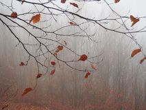 Some autumn leaves. On a tree stock images