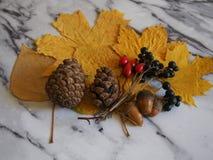 Some autumn leaves. On white background stock photos