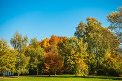 Some autumnal colored trees with blue sky.  stock photo