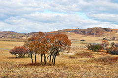 Some autumnal trees on the grassland Royalty Free Stock Image
