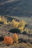 Some autumnal trees in the skirt of the hill. Sunset time stock photos