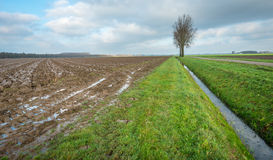 Some bare trees in a rural autumn landscape. Flat rural landscape with a country road, bare trees, a ditch and plowed fields. It is a cloudy day in the fall Royalty Free Stock Photos