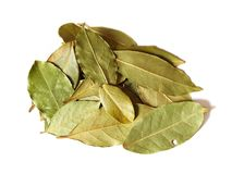 Some bay leaves. Macro bay leaves spice for cooking isolated on a white background Stock Photos