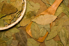 Some bay leaves Royalty Free Stock Image