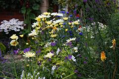 Some beautiful pretty plants in a garden environment Stock Images