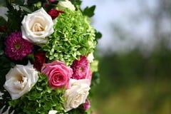 Some beautiful roses Stock Photos