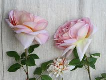 Some beautiful roses. On textile Royalty Free Stock Photo