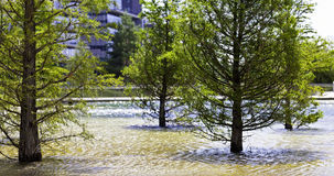 Some beautiful trees standing in a little lake. In urban surrounding Royalty Free Stock Photography