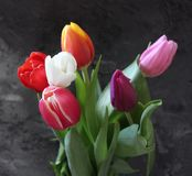 Some beautiful tulips. Some tulips with different colors with marble background Royalty Free Stock Photos