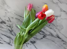 Some beautiful tulips. Some tulips with different colors with marble background Stock Images