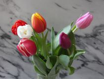 Some beautiful tulips. Some tulips with different colors with marble background Royalty Free Stock Photography