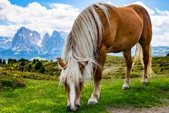 Big beautiful horse. Some beautiful wild horses with a mountain scenery in the background royalty free stock photos