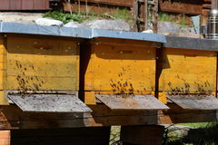 Some bee hives. Outdoors in a natural field royalty free stock images