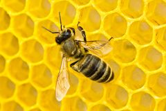 Bees complete work on creating honeycombs. Some bees build honeycombs, others transform nectar into honey Stock Image