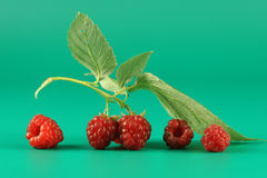 Some berries of a raspberry. And leaf on a green background Stock Photo