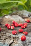 Some berries of wild strawberry lay on an old wooden surface. Wooden surface on which lie a few ripe berries of wild strawberry Stock Image