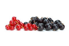 Some blackcurrants and redcurrants berries. Isolated on the white background stock photography
