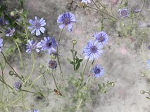Some blue wild flowers Royalty Free Stock Photos