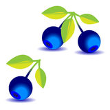 Some blueberries with a leaves. On a white background Stock Photos