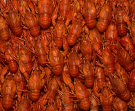 Some boiled crayfish. Texture in the form of boiled crayfish Royalty Free Stock Photo