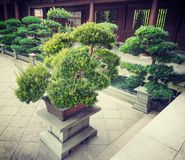 Some bonsais Hong Kong Nan lian garden. Hong Kong Nan lian garden summer 2015 stock images