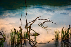 Some branches and grasses in river. With reflecting clouds Stock Images