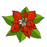 Some branches of poinsettia Stock Images
