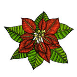 Some branches of poinsettia Stock Photography