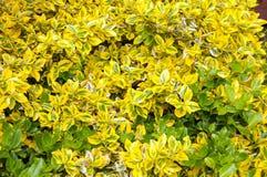 Emerald and gold in a summer garden. stock photos