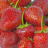 Some bright red strawberries Stock Photo