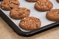 Some brown Cookies on a griddle. Some fresh brown Cookies with nuts on a griddle Stock Photography