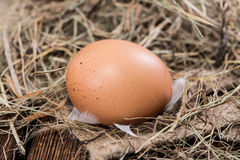 Some brown Eggs in Hey Stock Photos